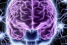 Brain Effects Elearning
