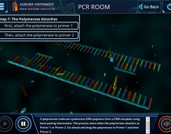 Auburn University: PCR Standard Simulation - PCR Room: DNA Uncoils
