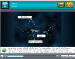 Tri-C 3D Stress Simulation Training - Neurons Screen