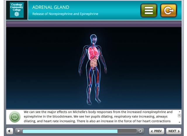 Tri-C 3D Stress Simulation Training - Zona Fasciculata (Z.F.) Screen